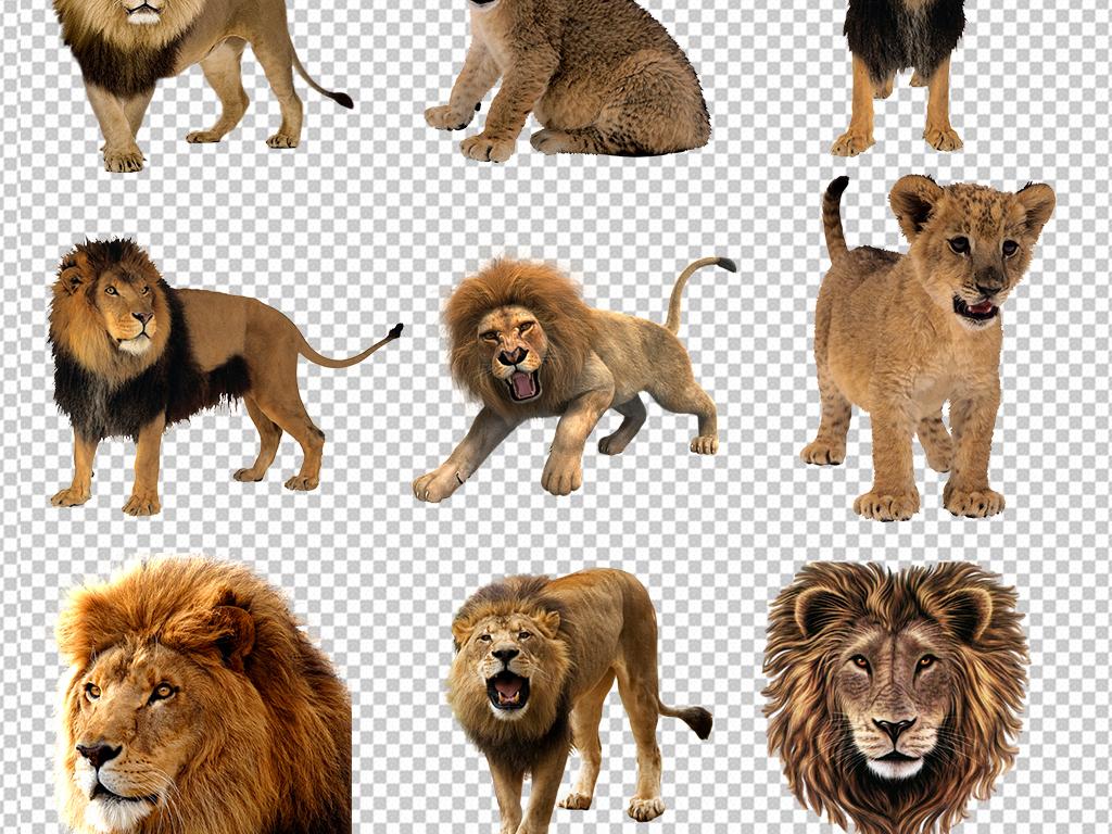 非洲大草原动物狮子图片素材