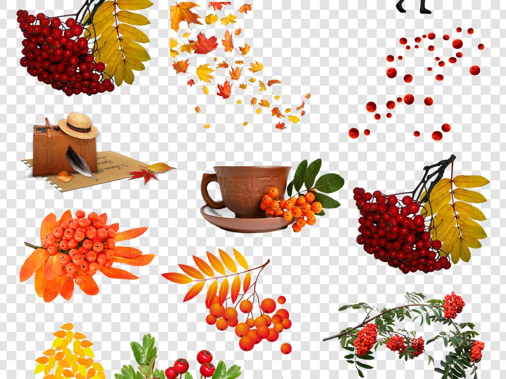 丰收秋天果子枫叶树叶秋天树叶素材秋天素材果实秋天果实秋季购物节秋