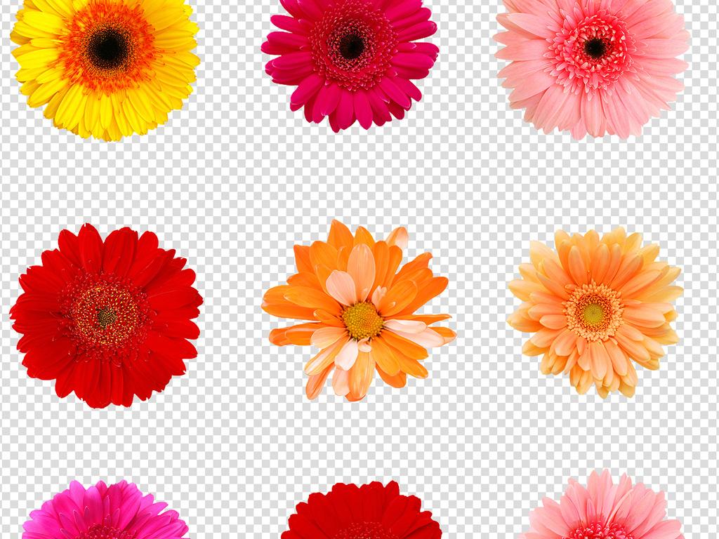 植物花草植物花朵花叶标本花朵鲜花鲜花花朵花藤角花汽车拉花花花姑娘