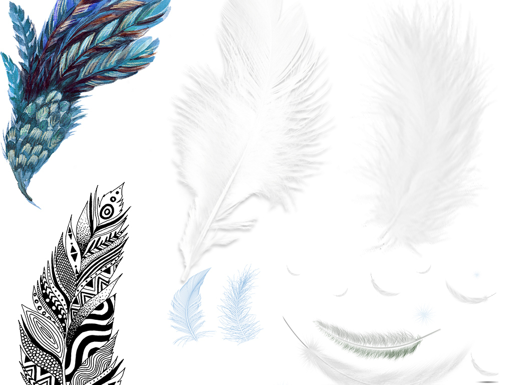 翅膀毛天鹅毛羽毛笔黑色羽毛羽毛素材黑色孔雀羽毛白色羽毛飘落白色