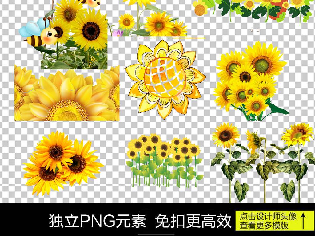 手绘太阳素材太阳花向日葵素材向日葵太阳花盆栽素材太阳花素材太阳花