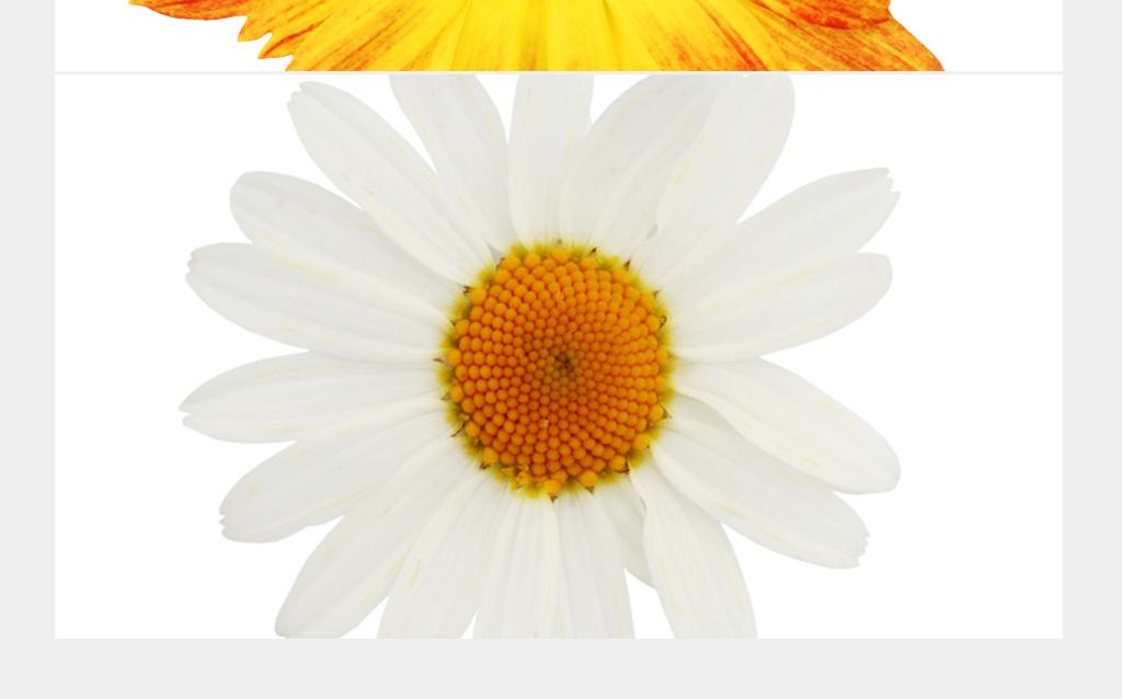 北欧小清新花瓶植物花卉无框画