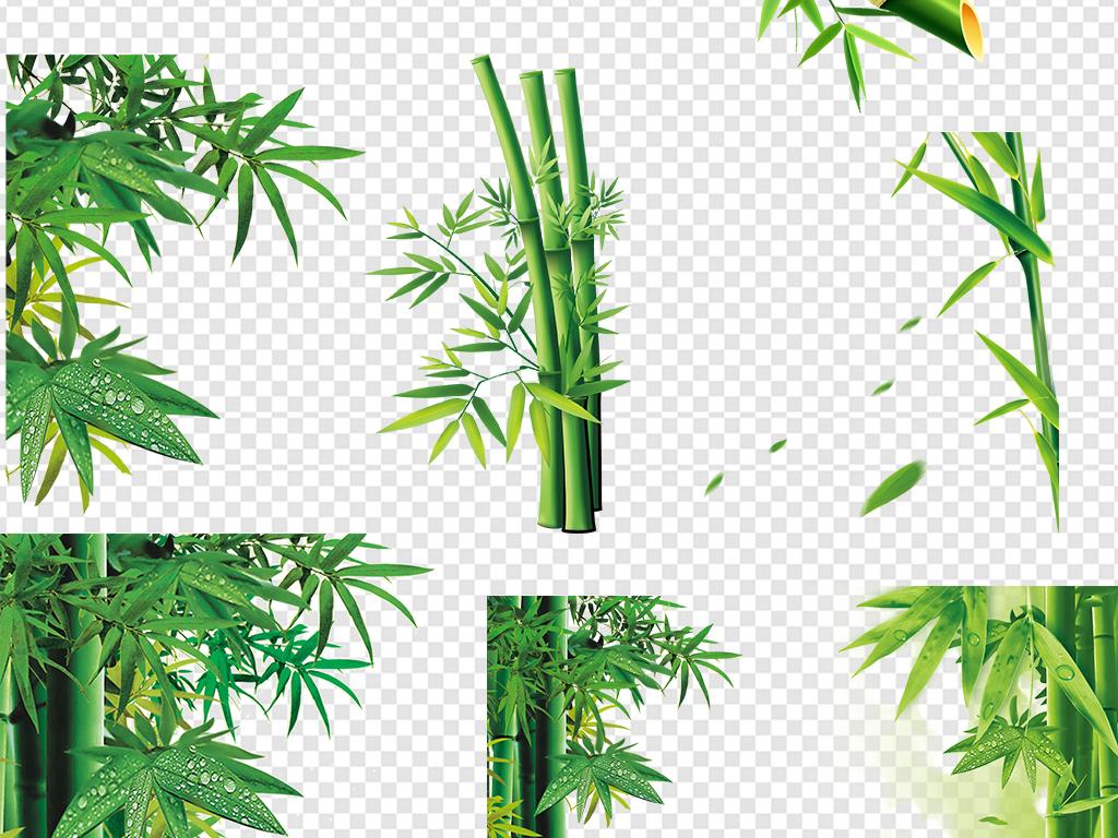 卡通手绘竹子水彩竹子竹叶图案树叶青竹竹子图片绿色图片素材绿色竹