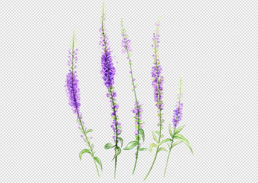唯美免扣手绘花朵薰衣草背景墙素材png