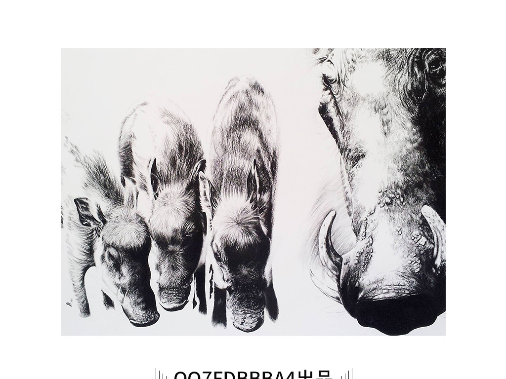 一群河马动物摄影黑白装饰画