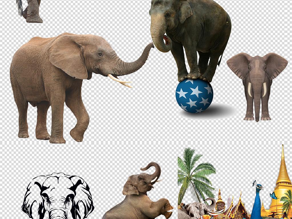 英文非洲动物小报