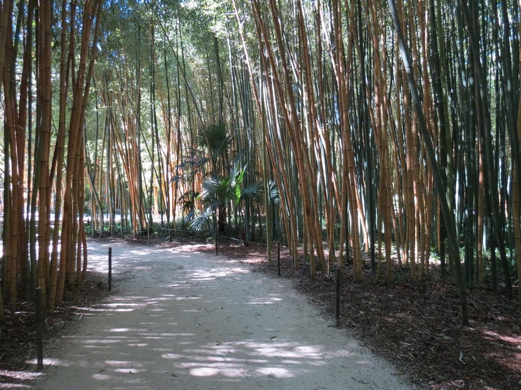 唯美竹林绿色清新背景竹林小路竹海风景摄影图片