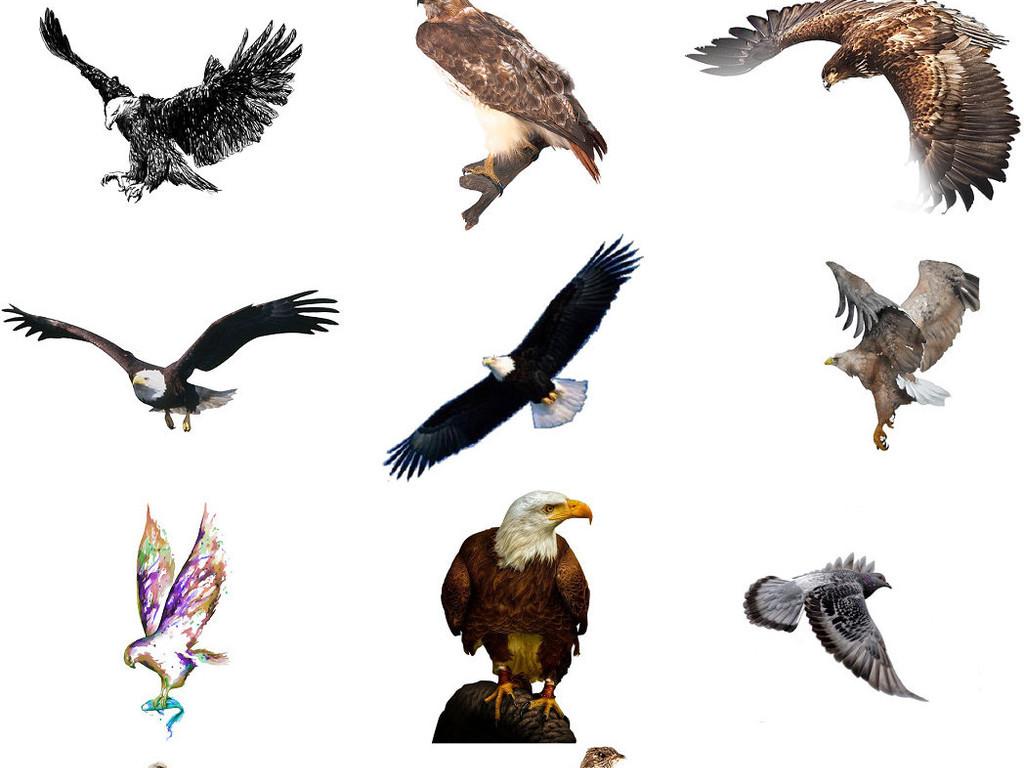 免抠素材素材4素材动物动物飞行动物老鹰卡通动物