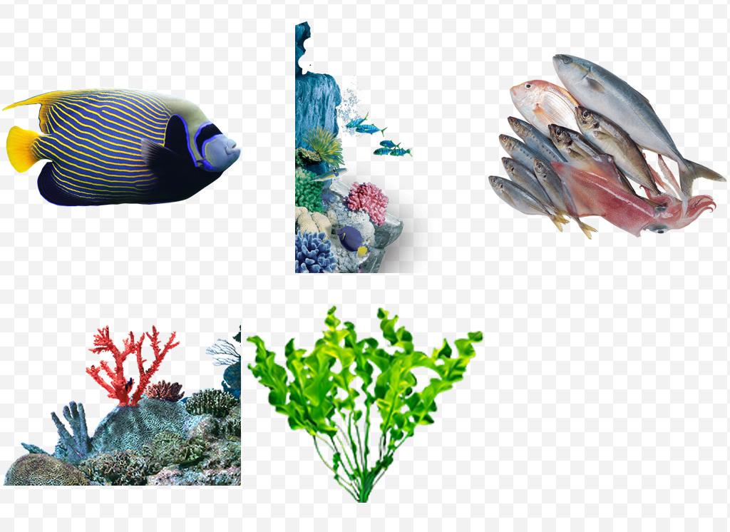 珊瑚海草石头海洋海底世界动物水产海洋生物蓝色海洋波浪水花绿色环保