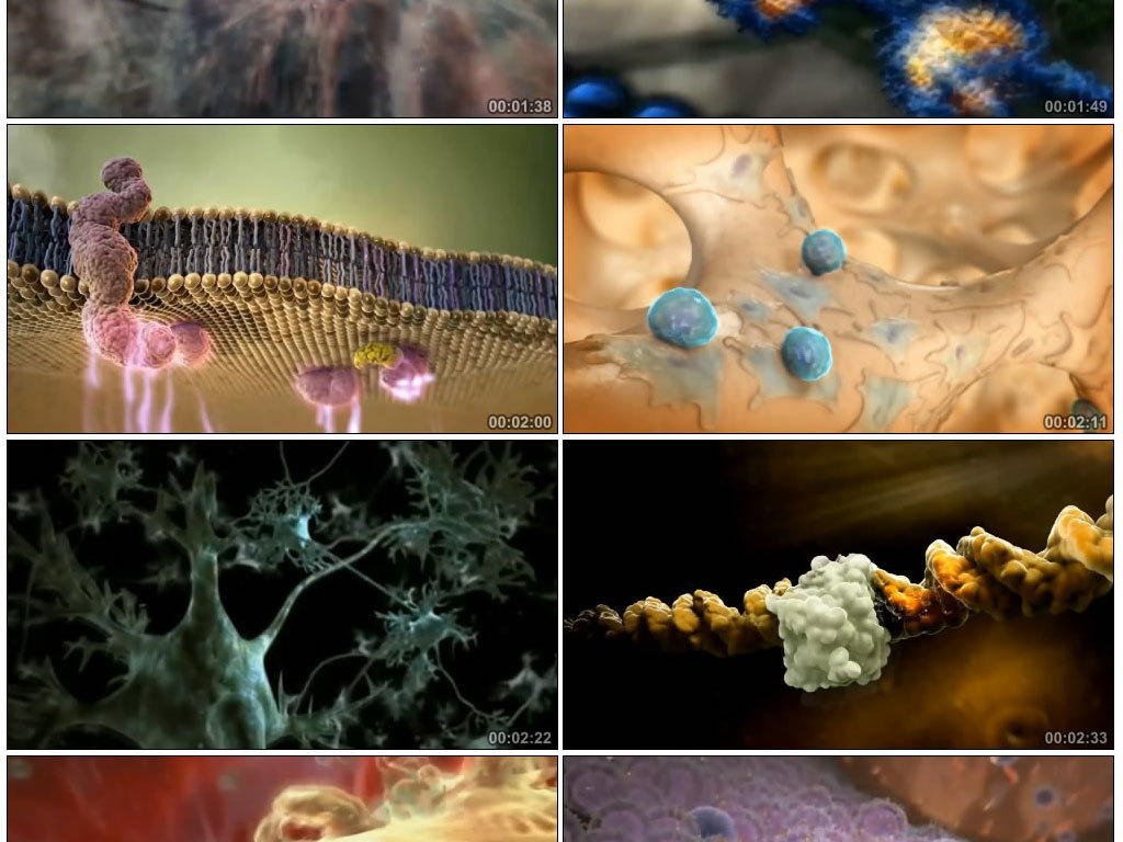 人体生理结构医疗细胞生物科技视频