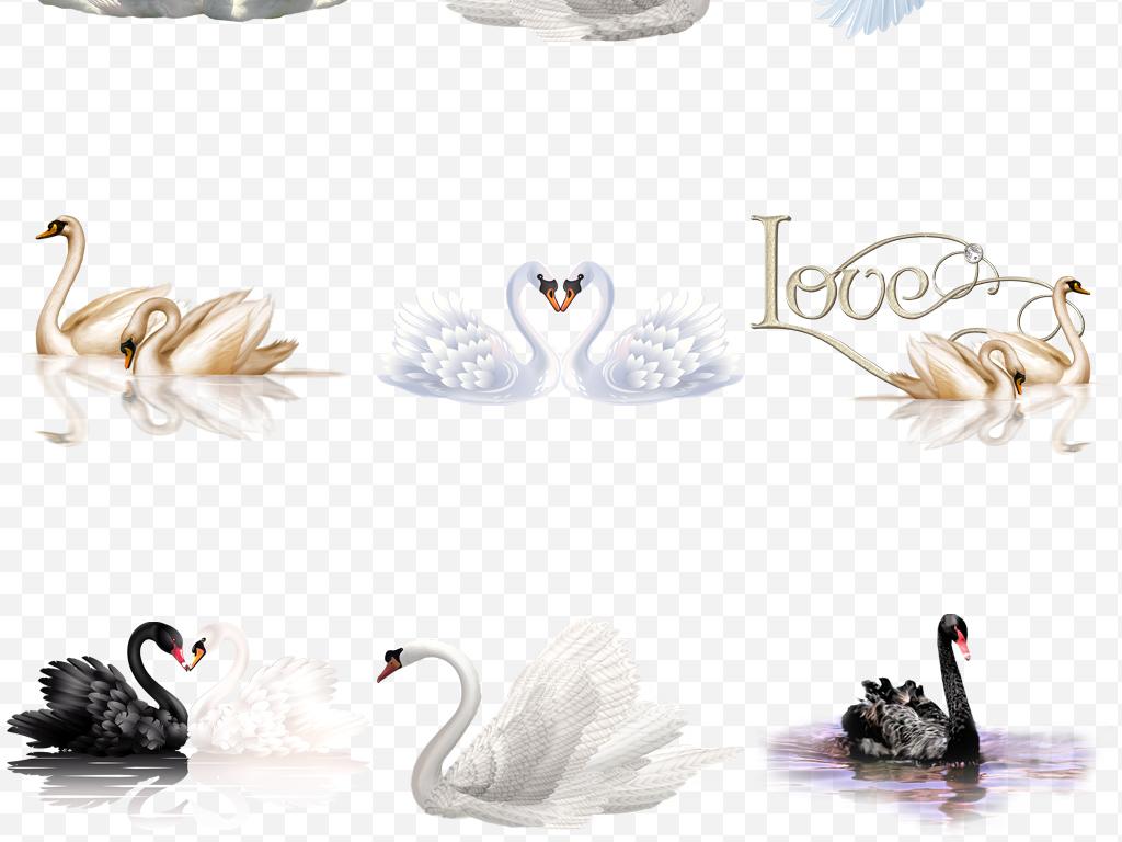手绘卡通天鹅动物图片png海报素材