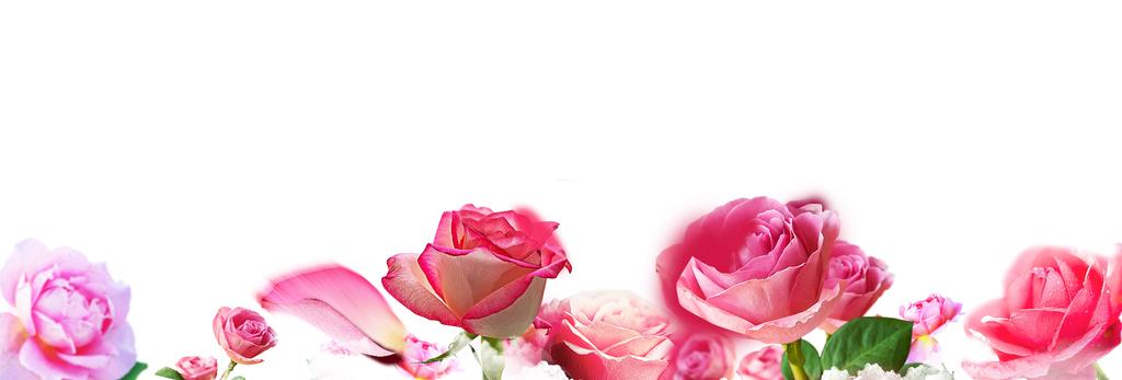 唯美免扣手绘花朵花环花卉背景墙素材png