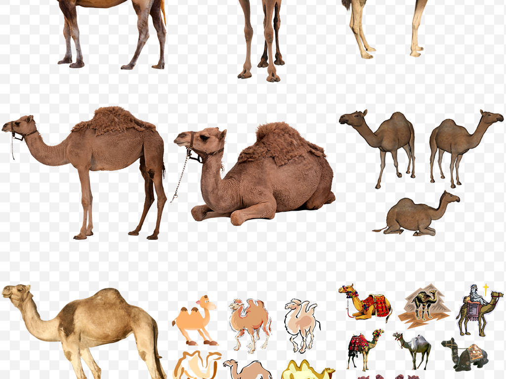 丝绸之路沙漠骆驼卡通动物png免扣素材