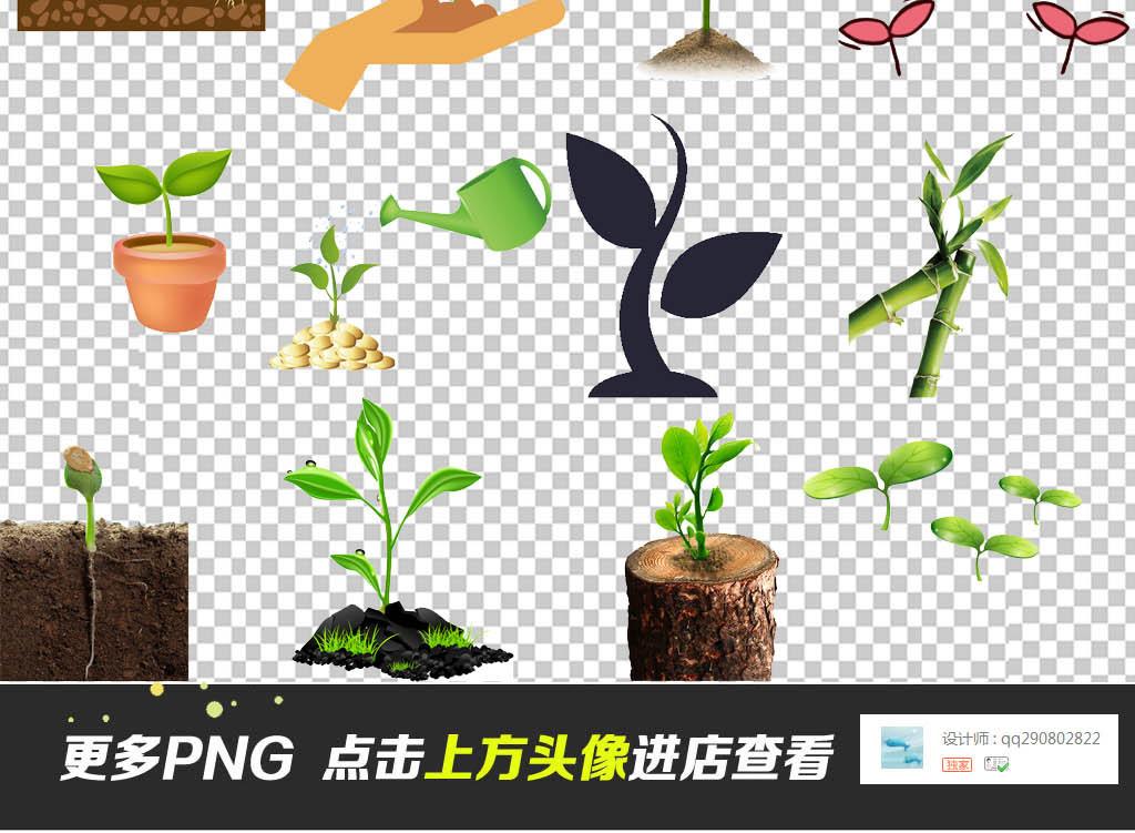 大树爱护守护保护爱心植树节小树苗成长种子素材绿色春天小草种子发芽