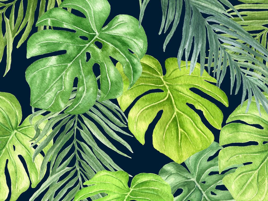 设计作品简介: 位图热带植物龟背竹细叶植物水彩 矢量图, cmyk格式