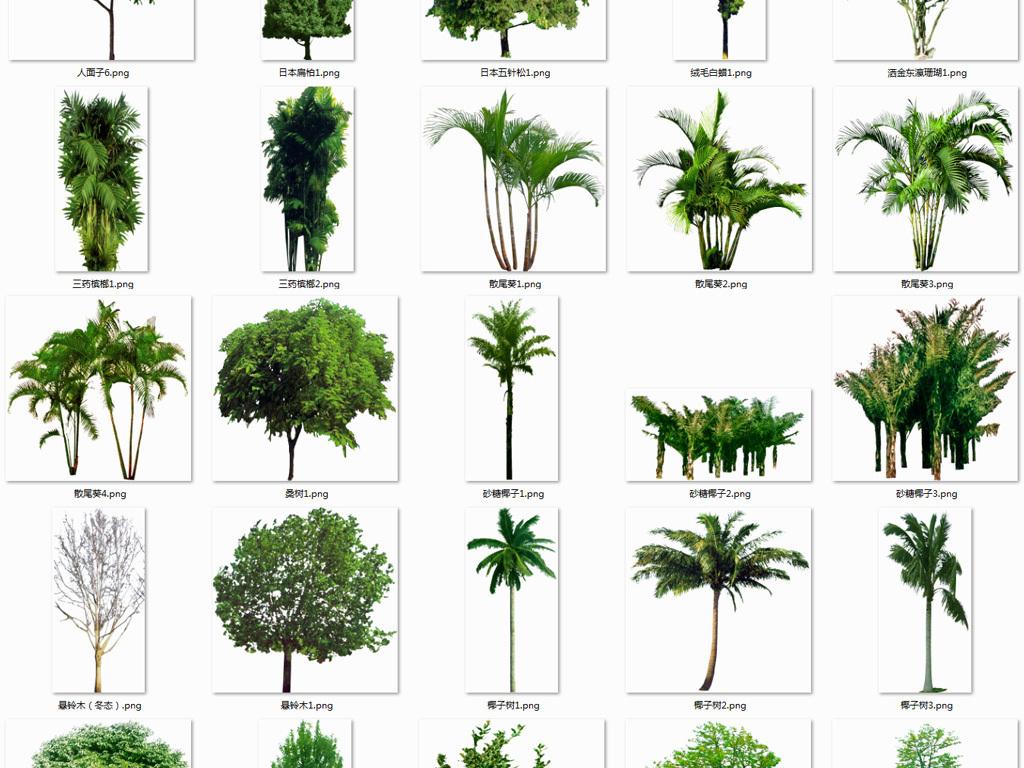 树png植物图片效果图设计素材环保免扣png树木背景绿化林木