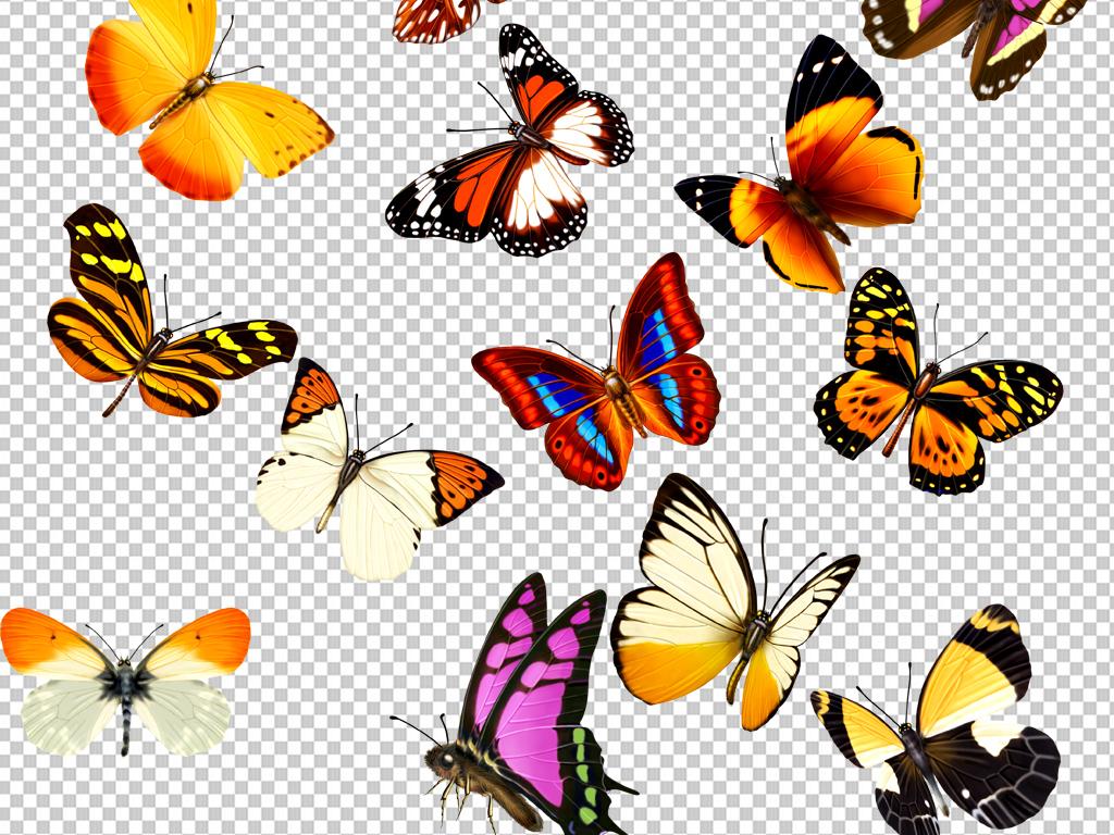 彩蝴蝶png免抠素材透明元素(图片编号:16894828)_动物