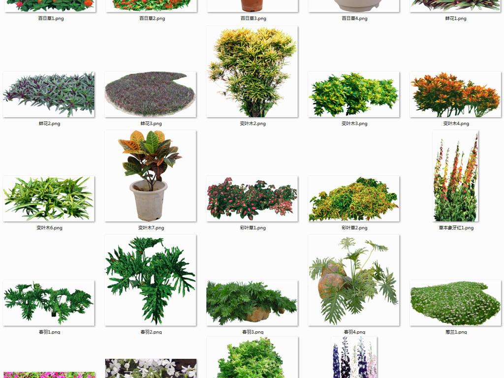 植物图片效果图设计素材环保树木背景绿化林木
