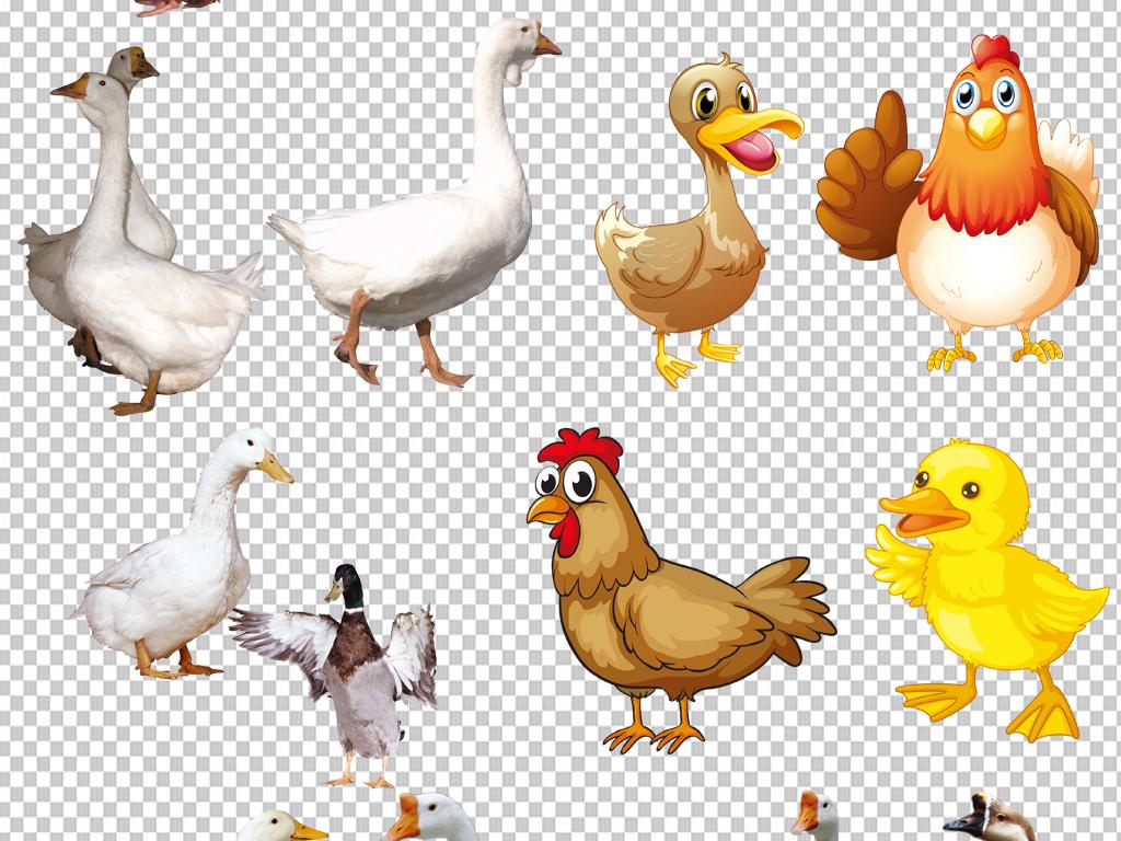 大白鹅png免抠素材透明元素(图片编号:16904650)_动物
