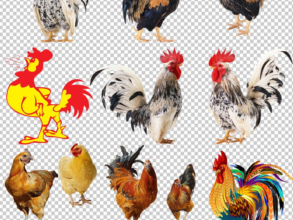 大公鸡png免抠素材透明元素(图片编号:16904653)_动物