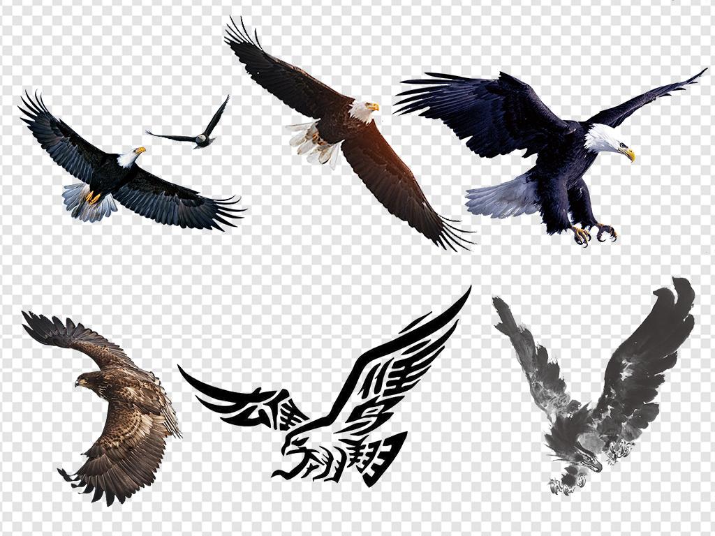 飞翔老鹰雄鹰展翅图片素材