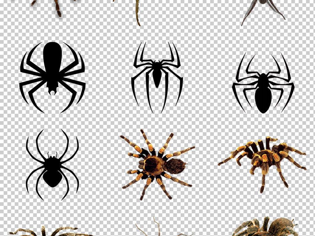 psd)蜘蛛图片大全大图蜘蛛卡通图片花蜘蛛图片世界上的蜘蛛蜘蛛简笔画