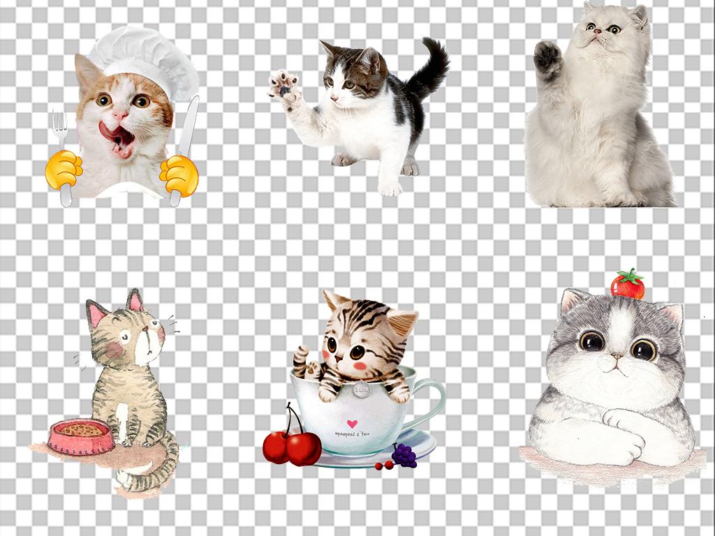 动物卡通                                          宠物猫手绘