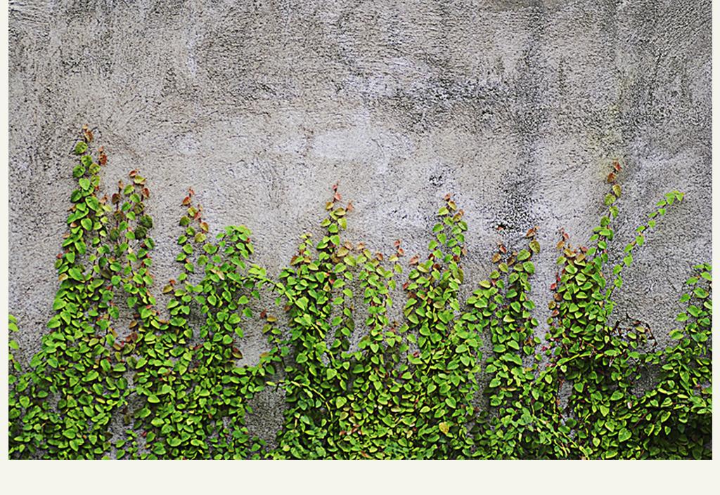 北欧风格绿色植物墙背景墙图片