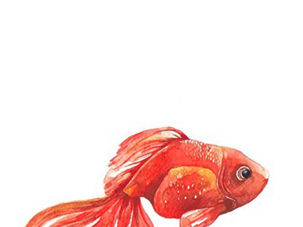 手绘水彩金鱼