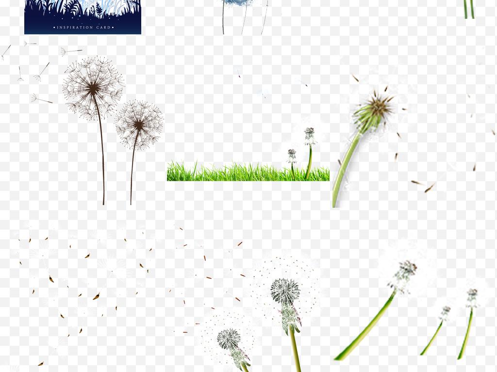 白色蒲公英png背景唯美蒲公英图片素材背景图片素材背景唯美手绘pop手