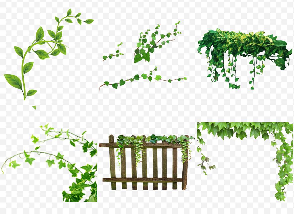 春天绿色树藤树叶花藤藤蔓png元素