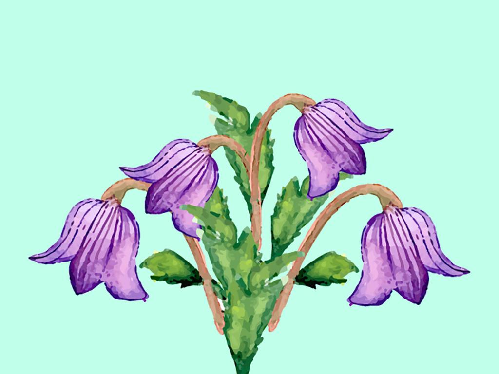 手绘水彩效果植物花卉
