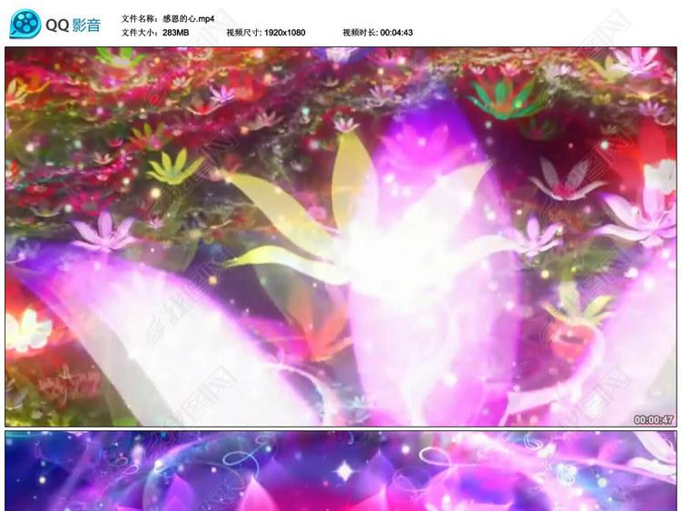 感恩的心(配乐成品)唯美花朵视频