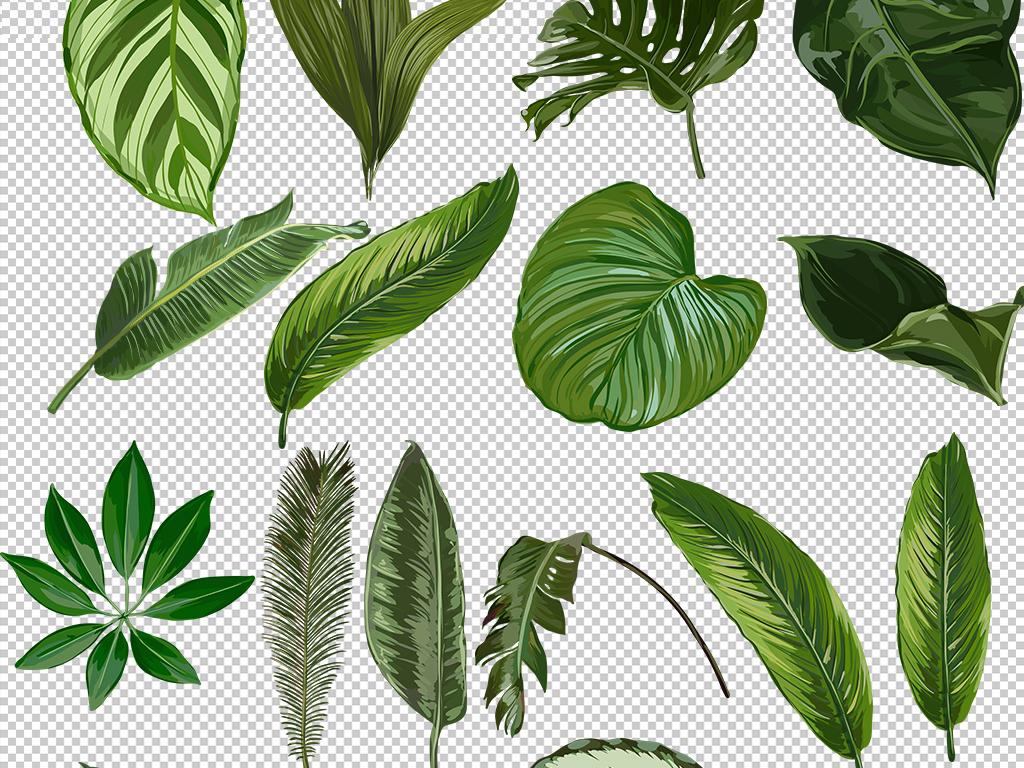 水彩手绘小清新绿色植物龟背竹热带叶子免扣图片素材