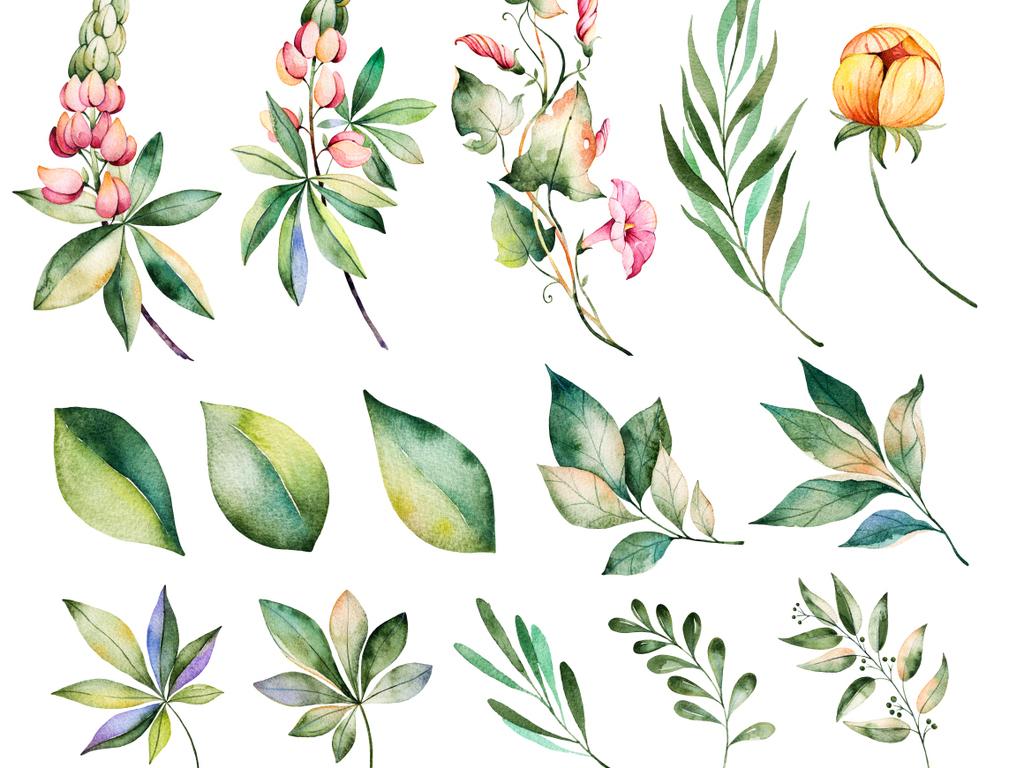 原创手绘水彩花卉花朵png
