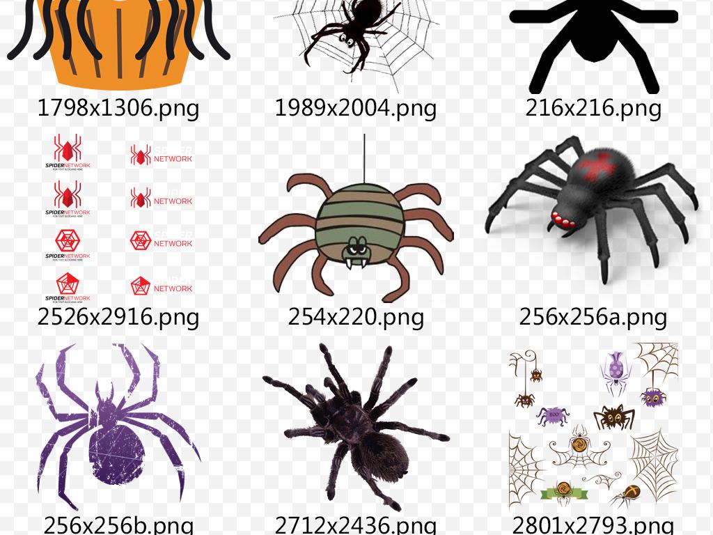 可爱蜘蛛图片蜘蛛头像手绘蜘蛛蜘蛛动物