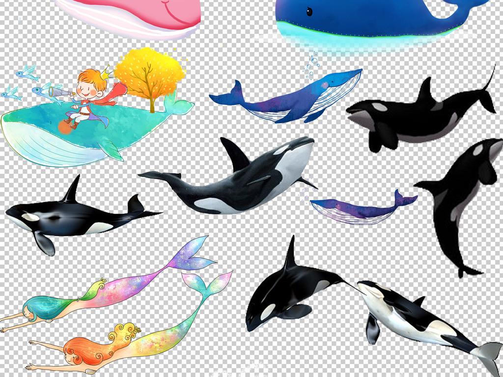0146鲸鱼卡通手绘铅笔画鲸鱼彩绘鲸鱼免抠素材