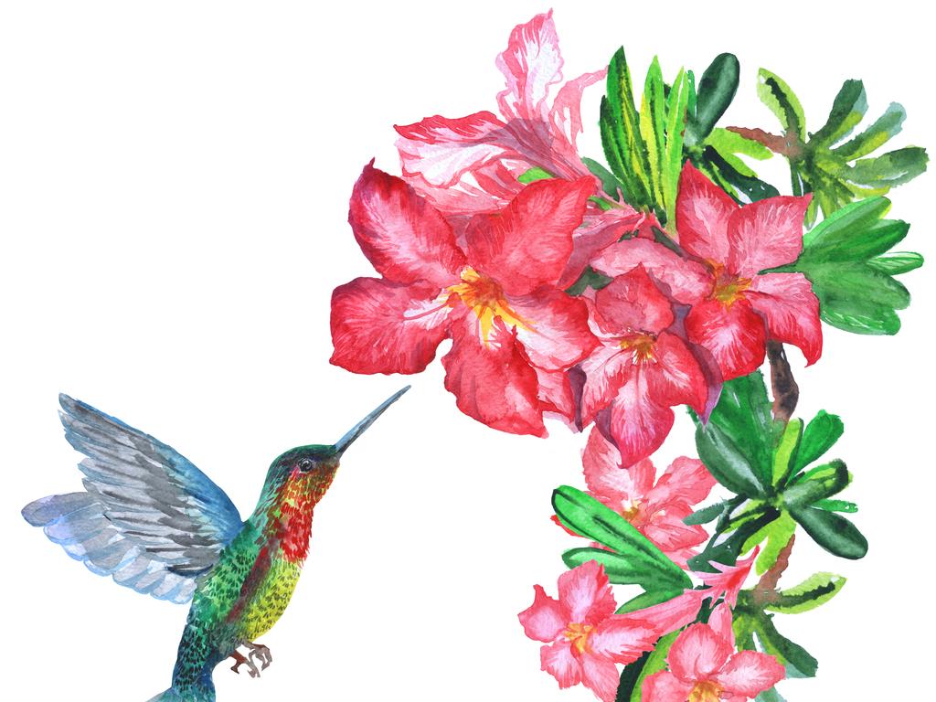 6款蜂鸟植物花卉手绘图图片下载素材-动物-我图网
