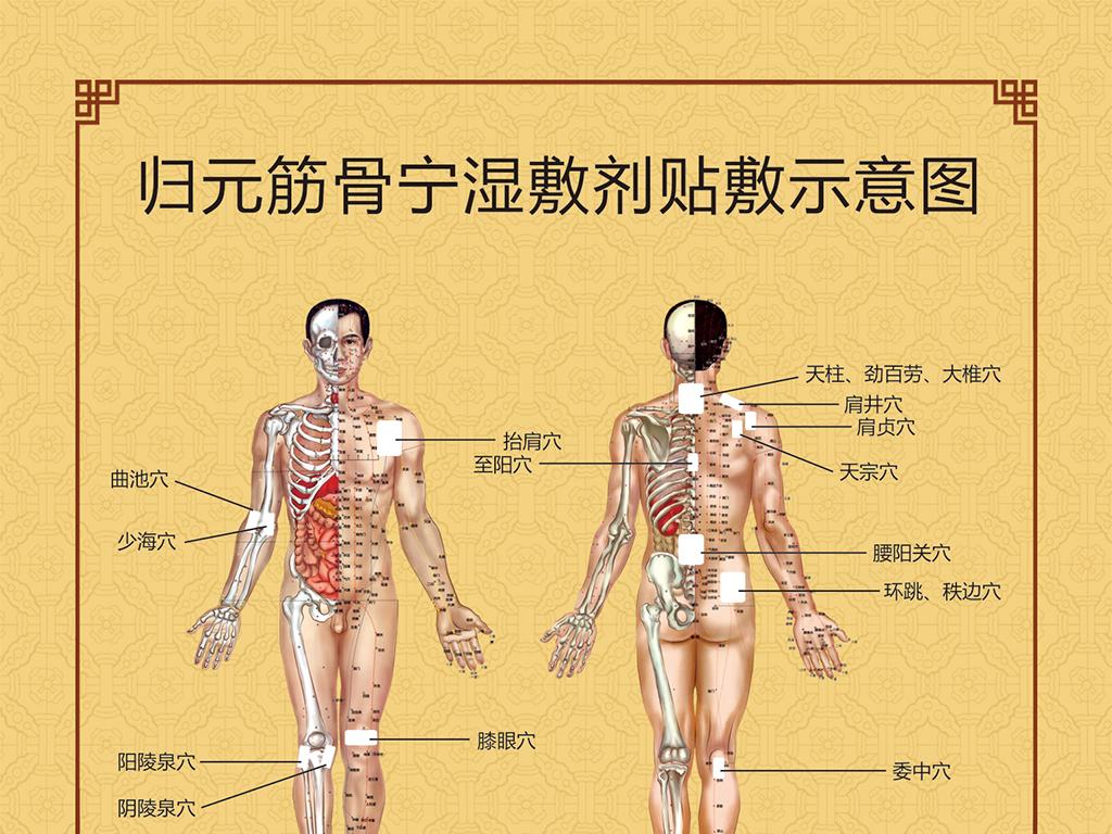 医院展板设计 > 人体结构骨骼穴位图  版权图片 分享 :  举报有奖
