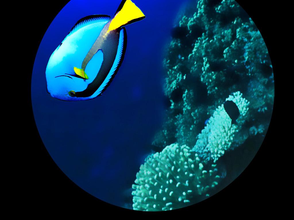 海鲜吃播 海豚海鲜 海豚姐姐的生蚝像是充气了一样肥_手机新浪网