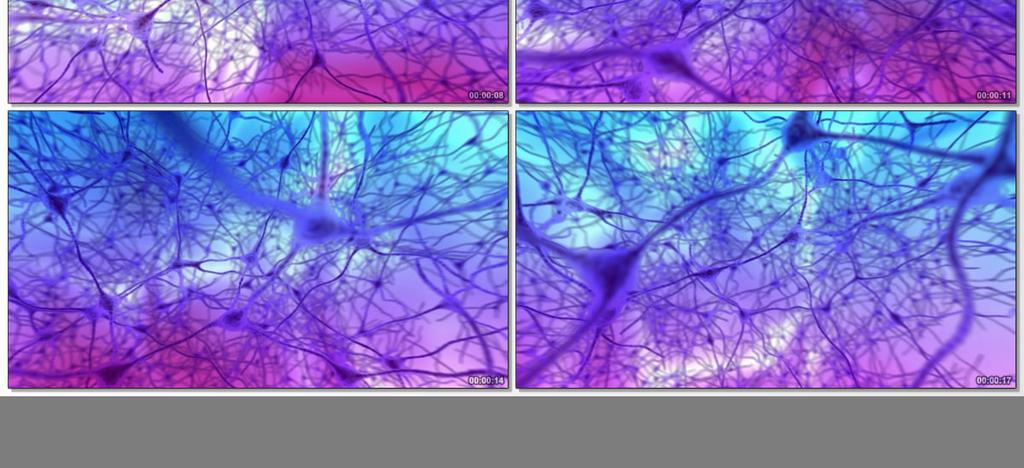 神经元视频