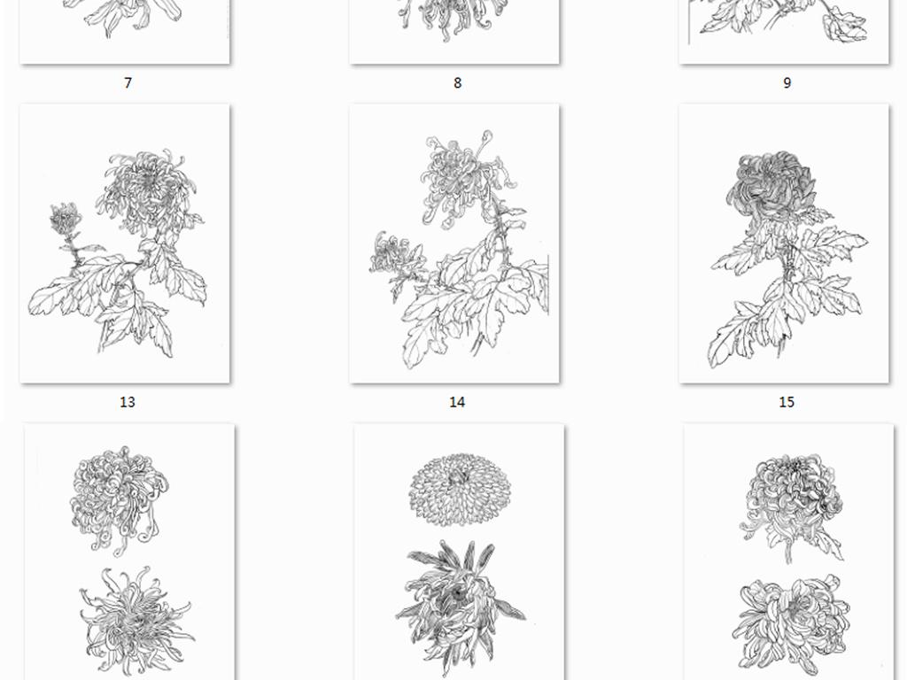 花卉茶花牡丹菊花手绘线稿