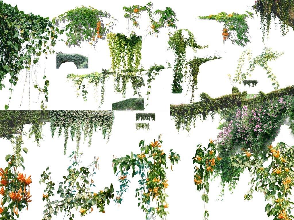 psd分层植物藤本植物背景素材(一)