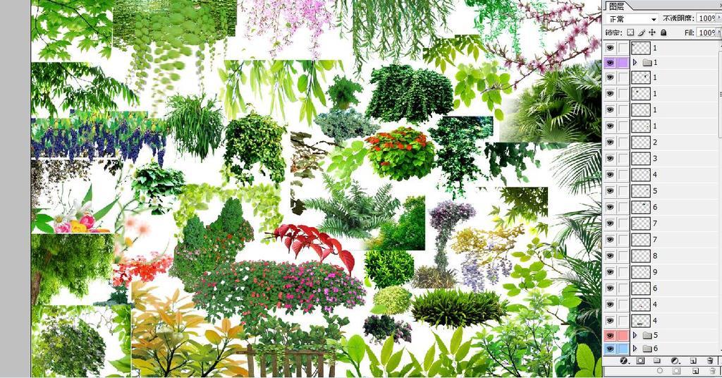 psd分层植物藤本植物背景素材(二)