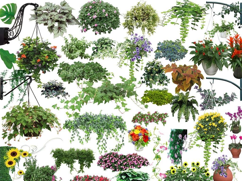 psd分层植物藤本植物背景素材(三)