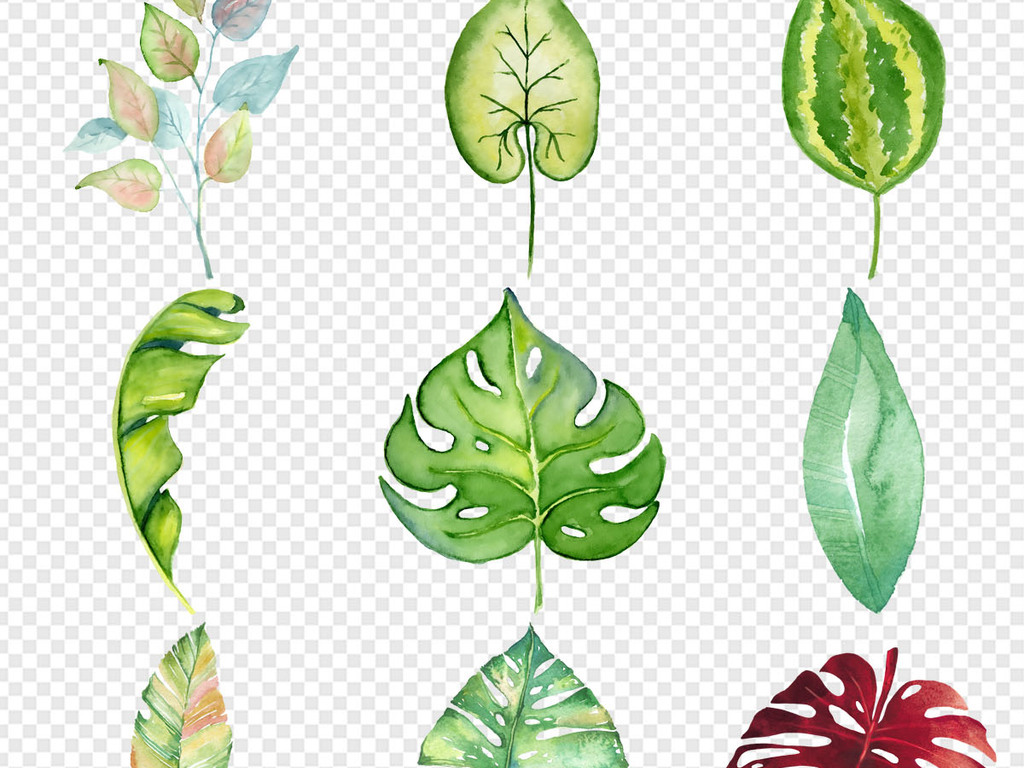 北欧小清新手绘插画水彩绿植叶子树叶设计png素材