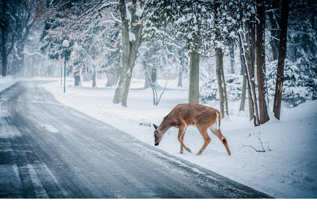 手绘小鹿雪景树林