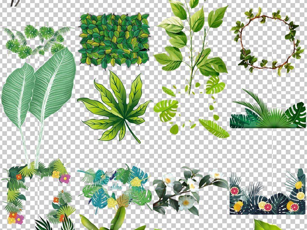 北欧绿植小清新美式手绘插画水彩png