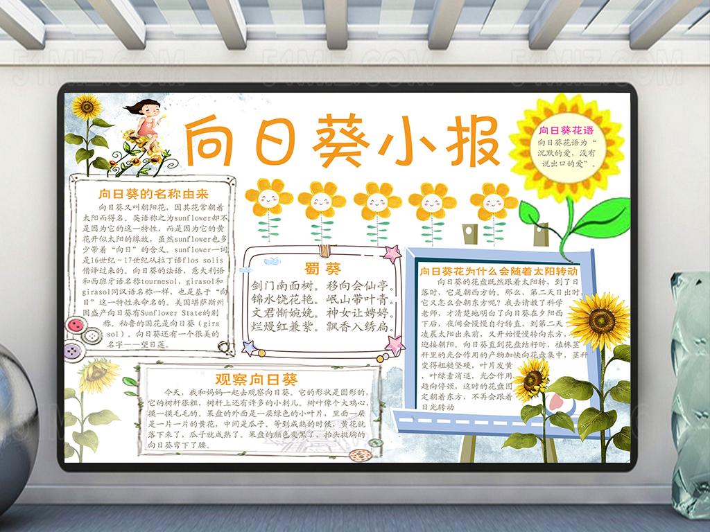 手抄报|小报 环保手抄报 爱护动植物手抄报 > 向日葵科普小报/向日葵