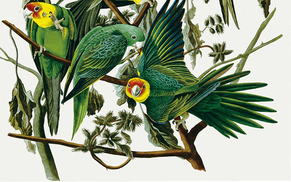 高清大图手绘花鸟唯美天顶壁画图片